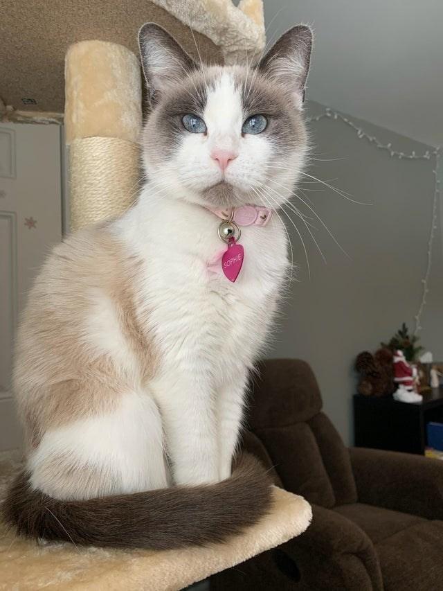 Cat - SOPHIE