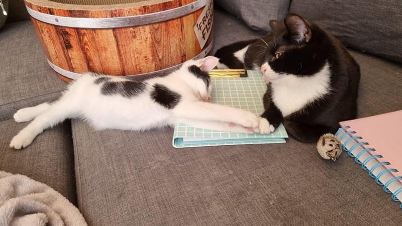 Cat - FRES FIS