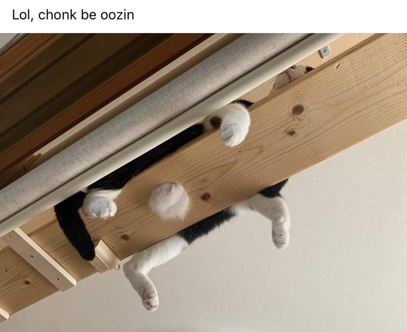 Wood - Lol, chonk be oozin