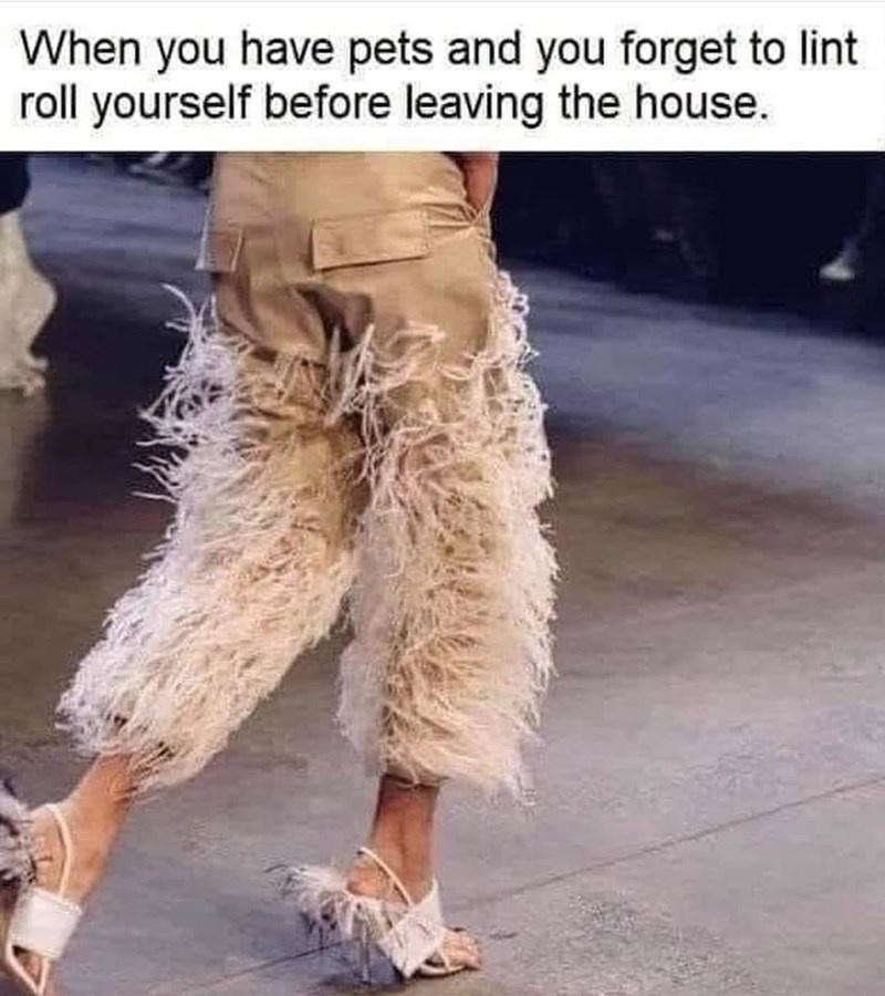 Photograph - When you have pets and you forget to lint roll yourself before leaving the house.