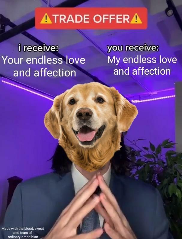 Funny dog memes, dank memes