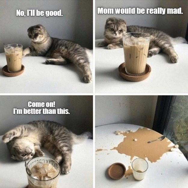 cat memes - 9603958528