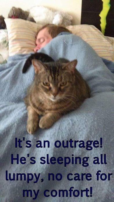 cat memes - 9603959296