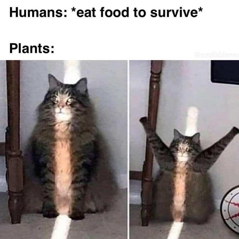 Cat - Humans: *eat food to survive* Plants: @scrollablemer