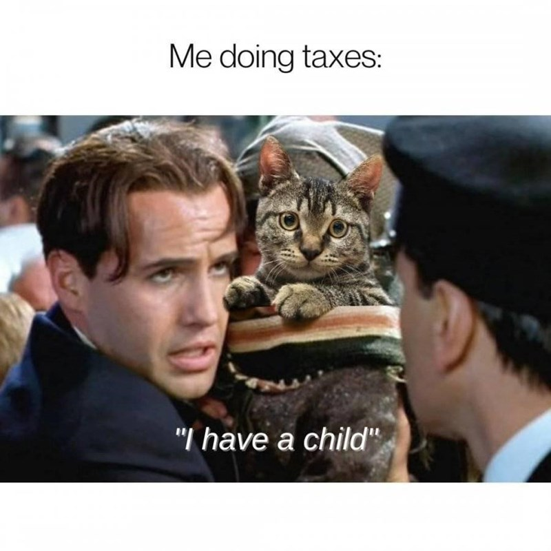 """Cat - Me doing taxes: """"I have a child"""""""