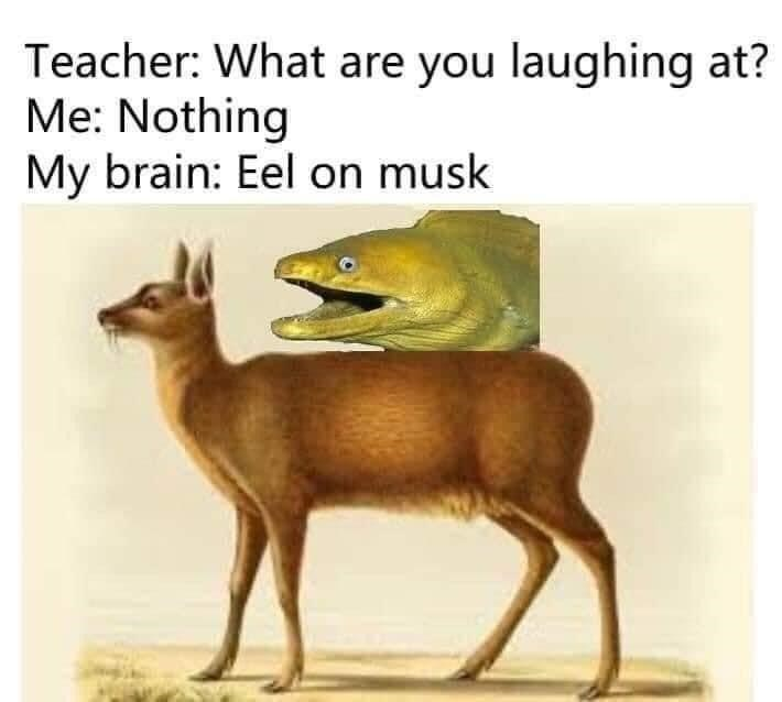 Organism - Teacher: What are you laughing at? Me: Nothing My brain: Eel on musk