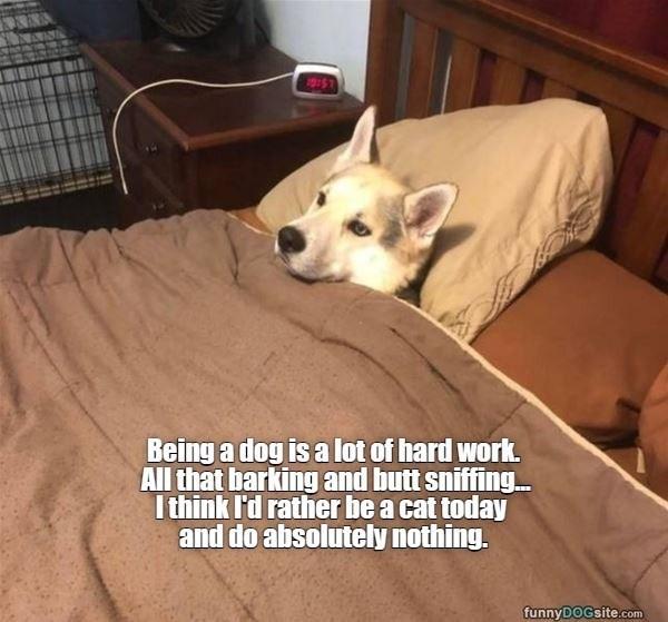 dog memes - 9604494848