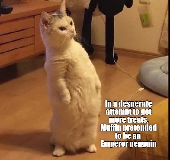 cat memes - 9604496640