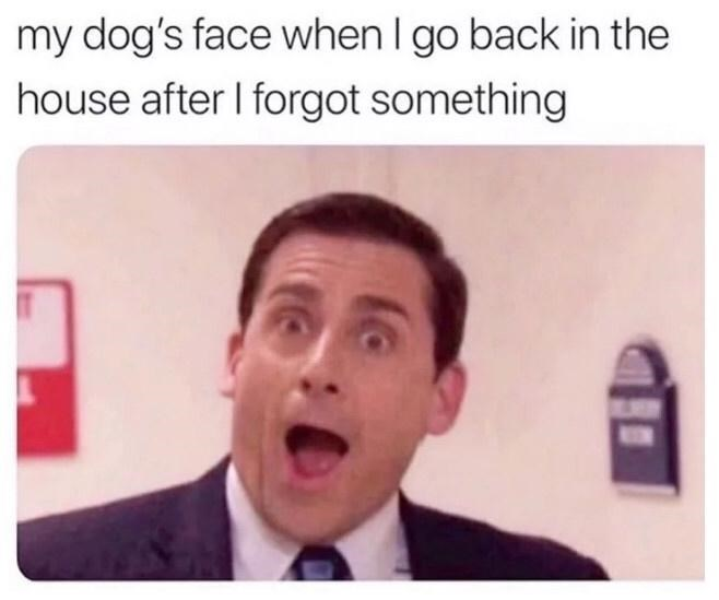 Forehead - my dog's face when I go back in the house after I forgot something