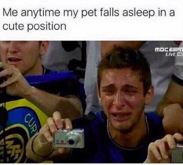 Product - Me anytime my pet falls asleep in a cute position MOCEST LIVE ND CURT