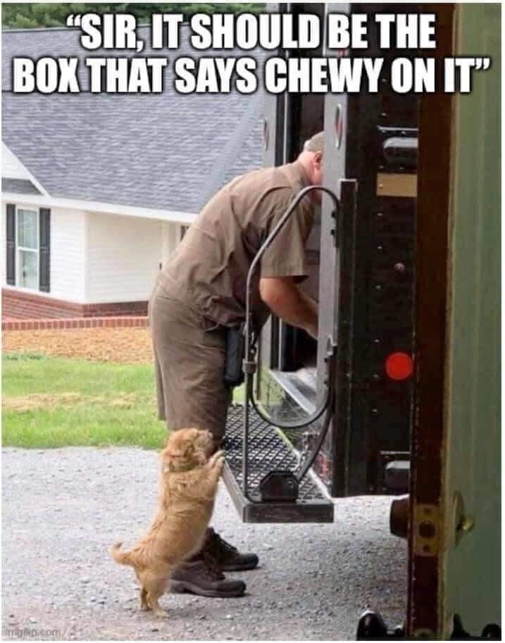 """Window - """"SIR, IT SHOULD BE THE BOX THAT SAYS CHEWY ON IT"""" impiip.com"""
