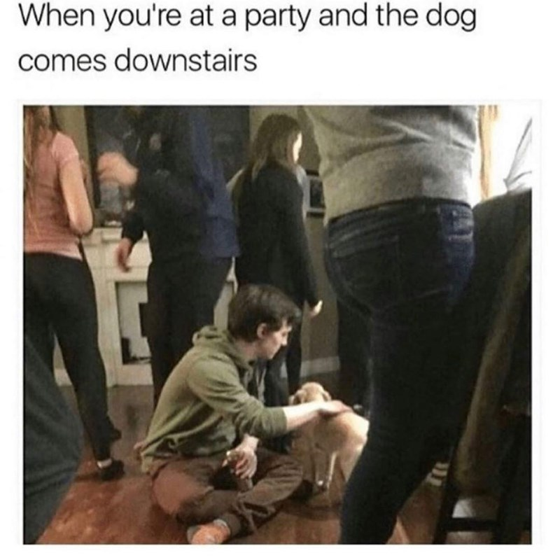 Jeans - When you're at a party and the dog comes downstairs