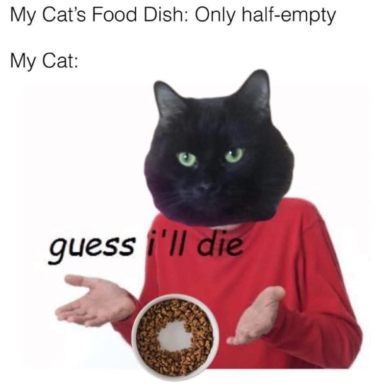 Cat - My Cat's Food Dish: Only half-empty My Cat: guess i'll die