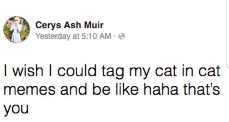 Font - Cerys Ash Muir Yesterday at 5:10 AM · @ I wish I could tag my cat in cat memes and be like haha that's you