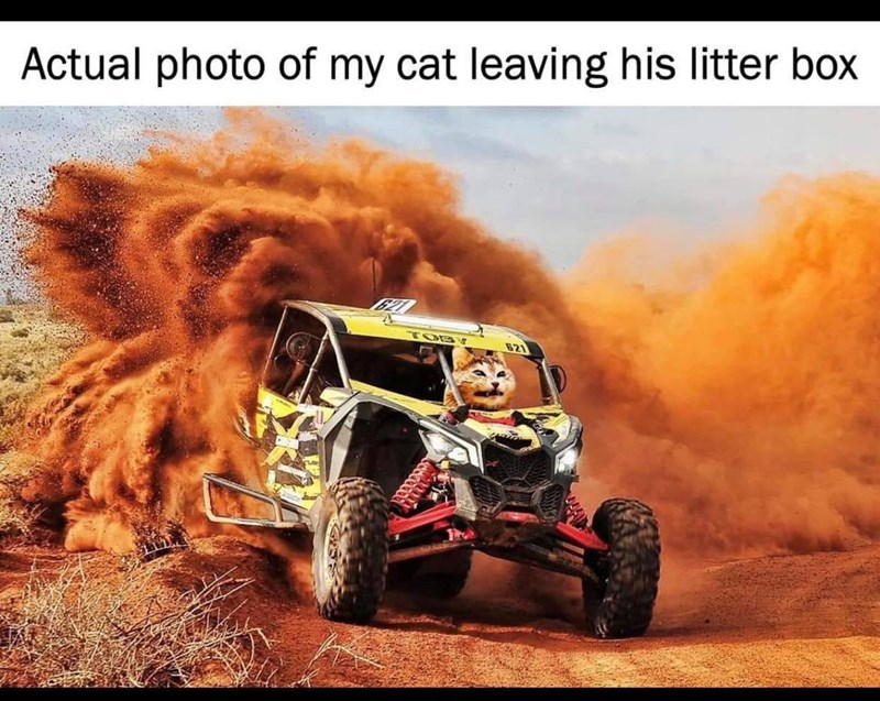 Tire - Actual photo of my cat leaving his litter box TOBY 821