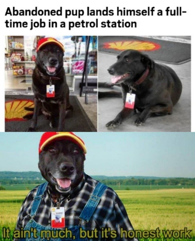 Funny meme about dog with human job, it's not much but it's honest work