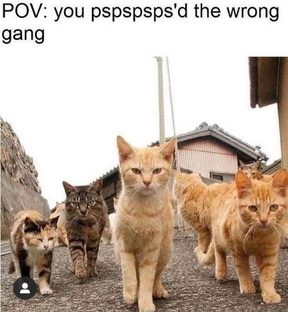 Cat - POV: you pspspsps'd the wrong gang
