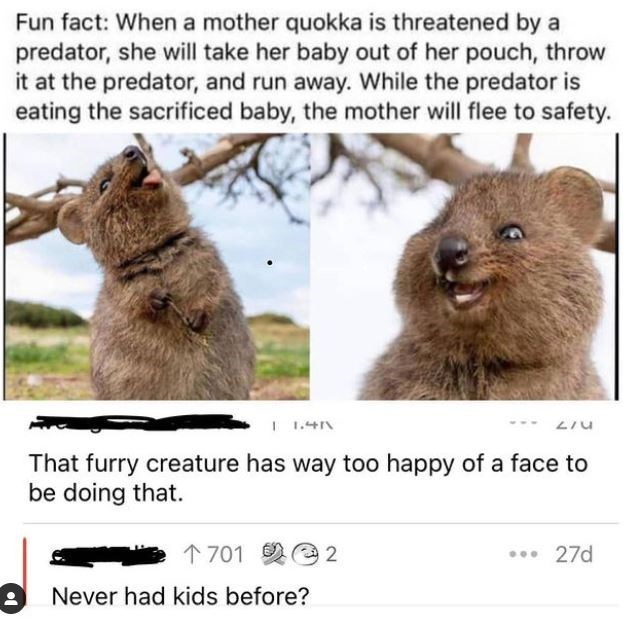 Ecoregion - Fun fact: When a mother quokka is threatened by a predator, she will take her baby out of her pouch, throw it at the predator, and run away. While the predator is eating the sacrificed baby, the mother will flee to safety. I 1.4N ... That furry creature has way too happy of a fac be doing that. to 个701 2@2 27d 2 Never had kids before?