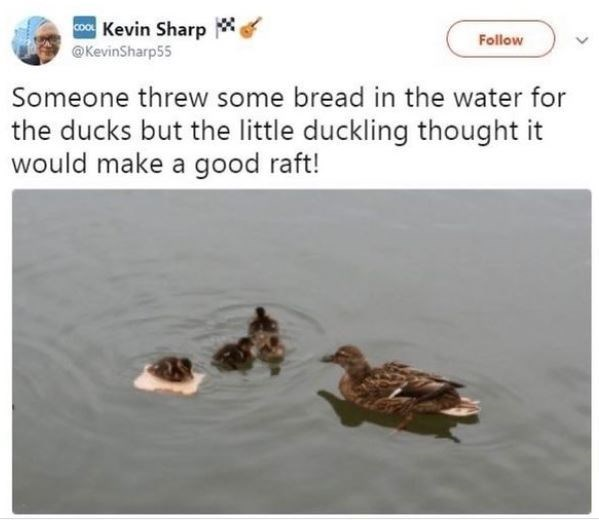 Water - coo Kevin Sharp * Follow @KevinSharp55 Someone threw some bread in the water for the ducks but the little duckling thought it would make a good raft!