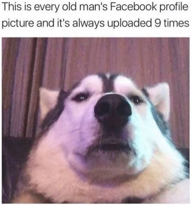 Dog - This is every old man's Facebook profile picture and it's always uploaded 9 times