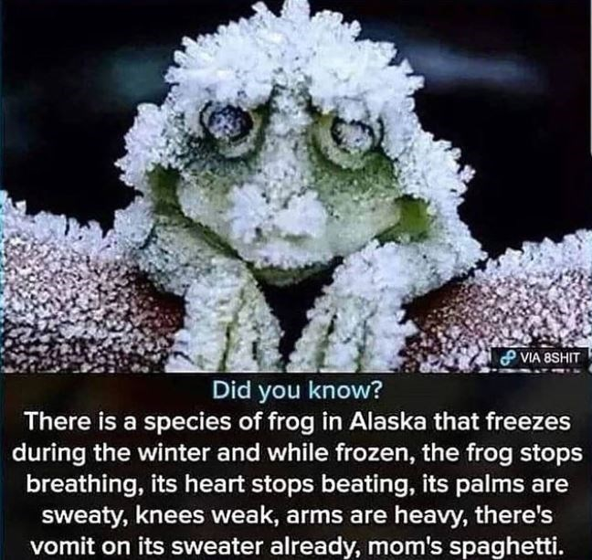 Flower - P VIA 8SHIT Did you know? There is a species of frog in Alaska that freezes during the winter and while frozen, the frog stops breathing, its heart stops beating, its palms are sweaty, knees weak, arms are heavy, there's vomit on its sweater already, mom's spaghetti.