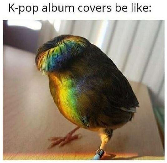 Bird - K-pop album covers be like: