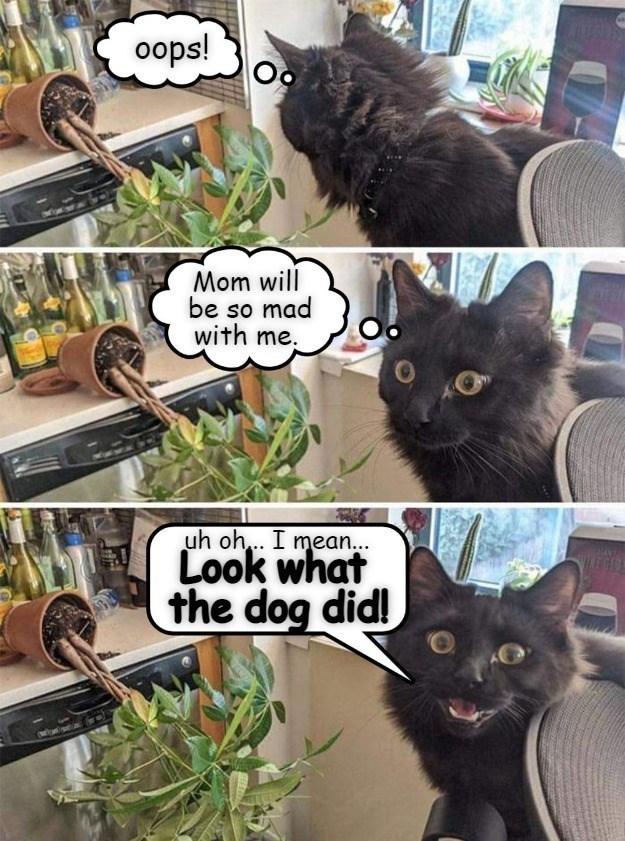 cat memes - 9604982016