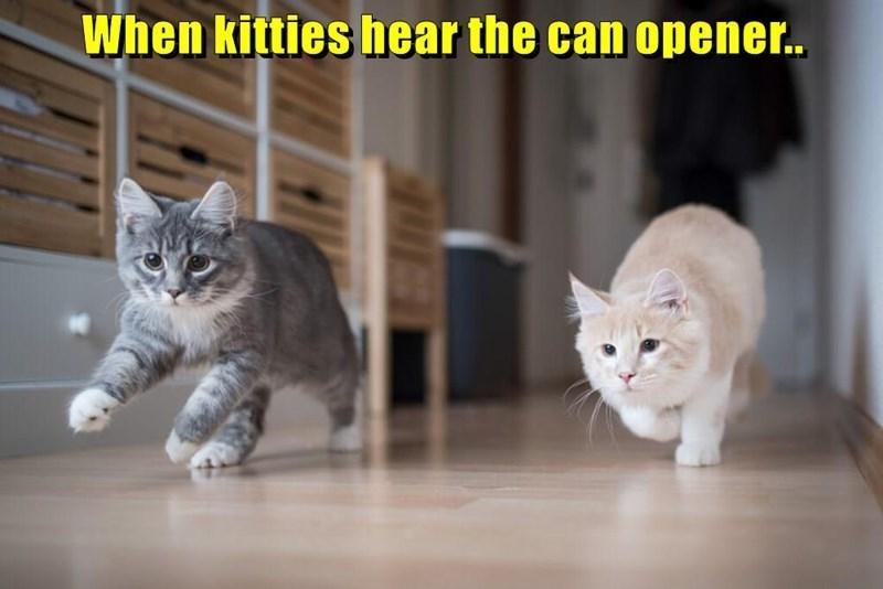cat memes - 9604982528