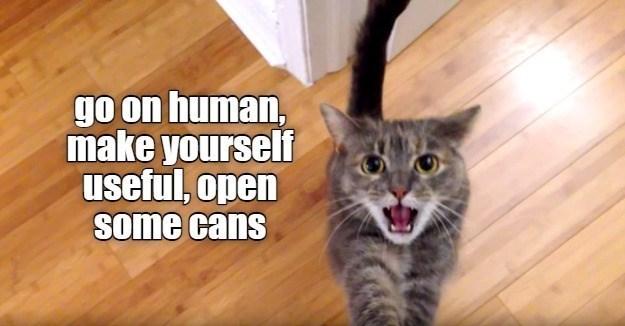 cat memes - 9604983040