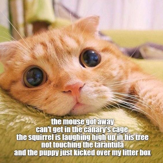 cat memes - 9604983296