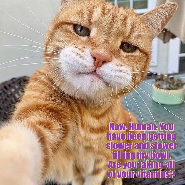 cat memes - 9604983808