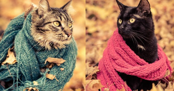 photoshoot for the fall of cat's wearing fashionable scarves