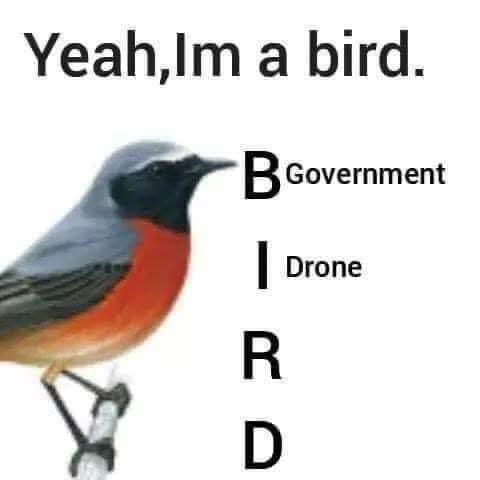 Bird - Yeah,Im a bird. BGovernment Drone R D