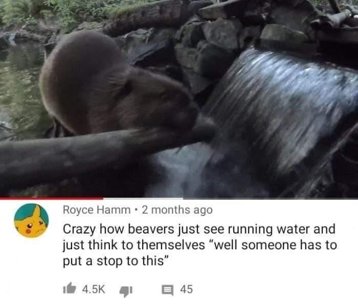 """Organism - Royce Hamm 2 months ago Crazy how beavers just see running water and just think to themselves """"well someone has to put a stop to this"""" 4.5K 1 E 45"""
