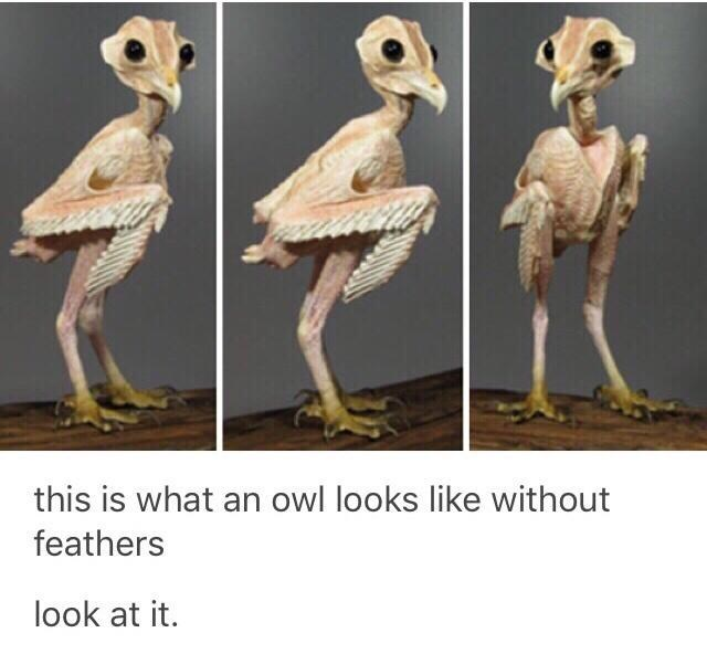 Photograph - this is what an owl looks like without feathers look at it.