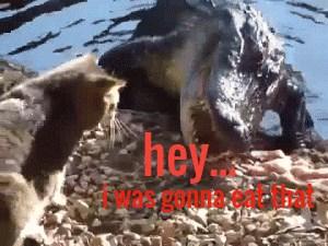 Stop stealing my food!