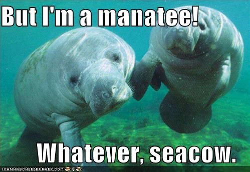But I M A Manatee Whatever Seacow Cheezburger Funny Memes