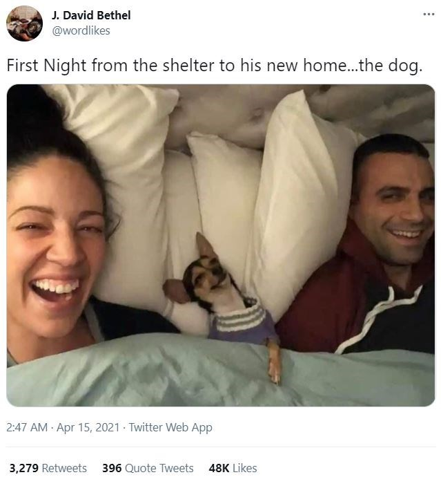 Nose - J. David Bethel @wordlikes ... First Night from the shelter to his new home...the dog. 2:47 AM · Apr 15, 2021 · Twitter Web App 3,279 Retweets 396 Quote Tweets 48K Likes