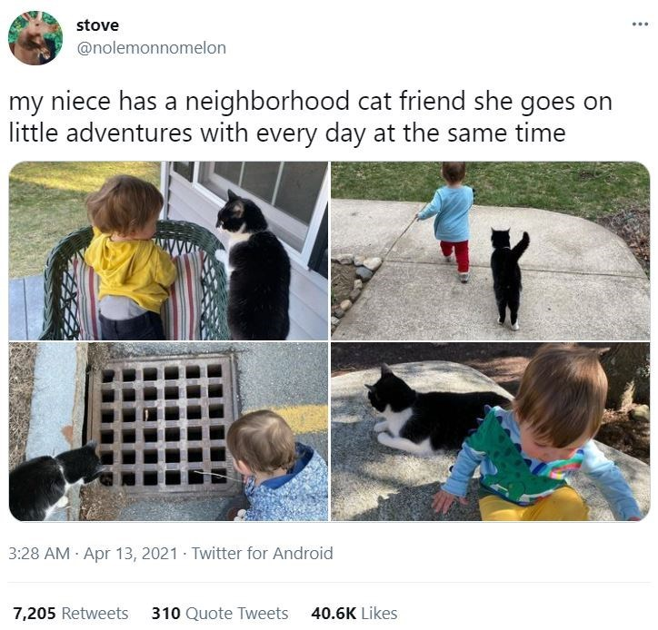Photograph - stove ... @nolemonnomelon my niece has a neighborhood cat friend she goes on little adventures with every day at the same time 3:28 AM Apr 13, 2021 · Twitter for Android 7,205 Retweets 310 Quote Tweets 40.6K Likes