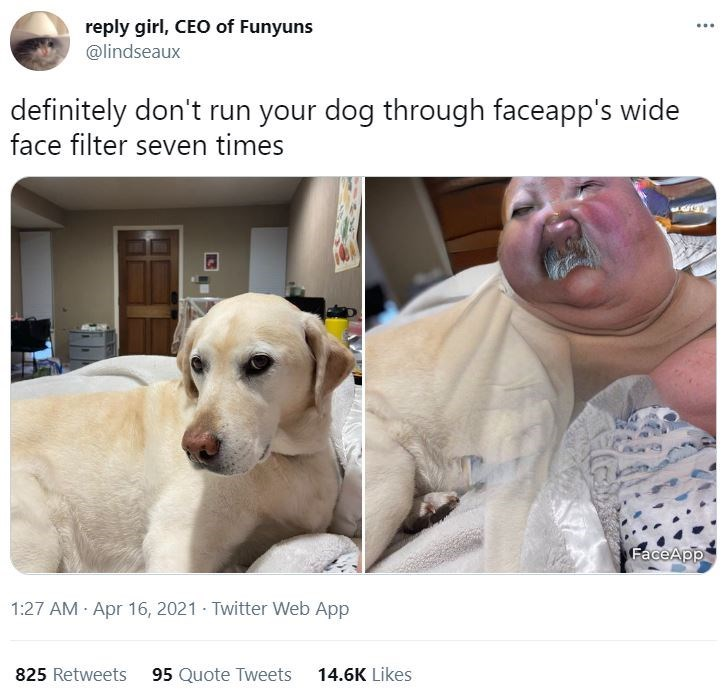 Nose - reply girl, CEO of Funyuns @lindseaux ... definitely don't run your dog through faceapp's wide face filter seven times FaceApp 1:27 AM Apr 16, 2021 Twitter Web App 825 Retweets 95 Quote Tweets 14.6K Likes