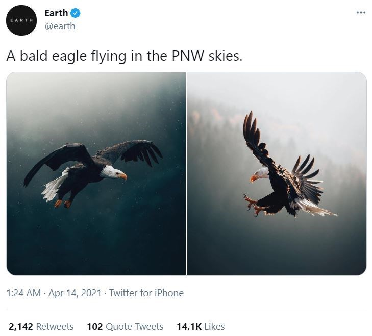 Bird - Earth ... EARTH @earth A bald eagle flying in the PNW skies. 1:24 AM Apr 14, 2021 Twitter for iPhone 2,142 Retweets 102 Quote Tweets 14.1K Likes