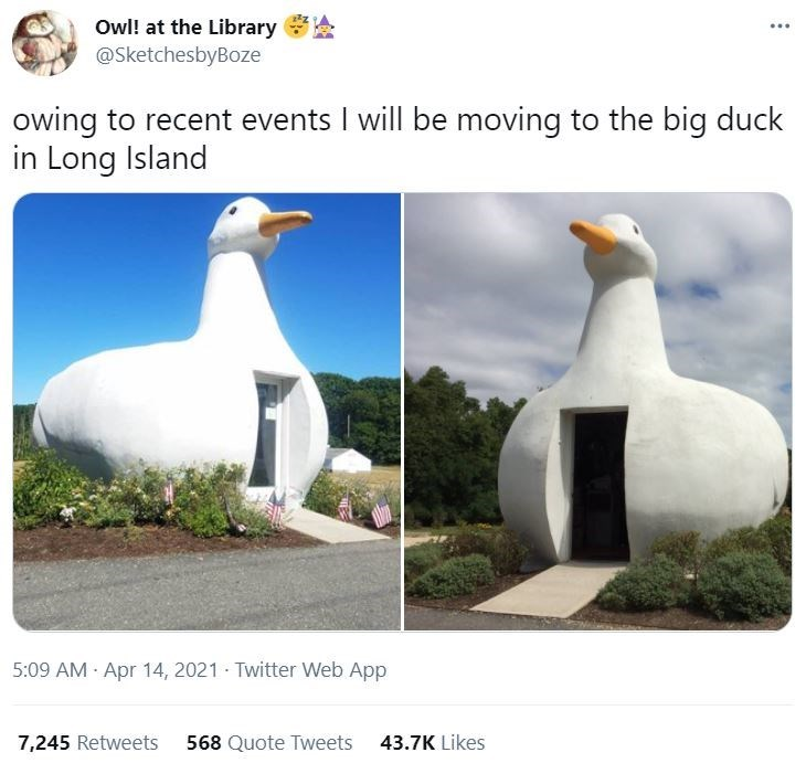 Bird - Owl! at the Library @SketchesbyBoze owing to recent events I will be moving to the big duck in Long Island 5:09 AM Apr 14, 2021 - Twitter Web App 7,245 Retweets 568 Quote Tweets 43.7K Likes