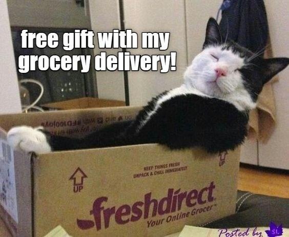 cat memes - 9605912064