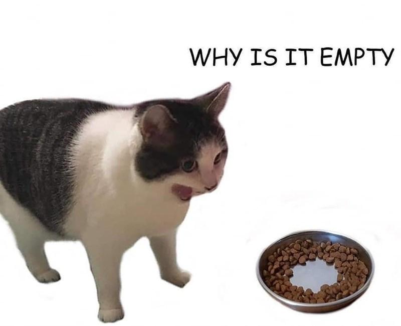 funny memes, memes, cat memes