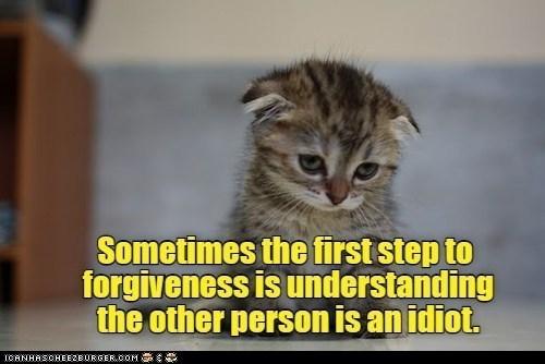 cat memes - 9606350336