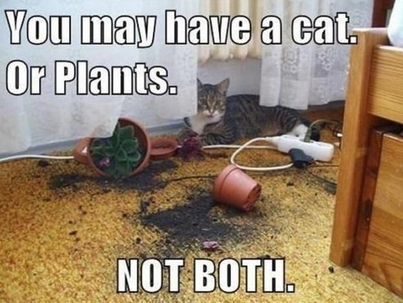 Cat - You may have a ct. Or Plants. NOT BOTH.
