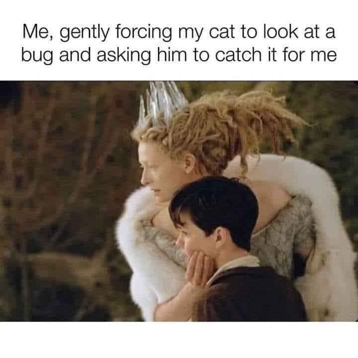 Human - Me, gently forcing my cat to look at a bug and asking him to catch it for me