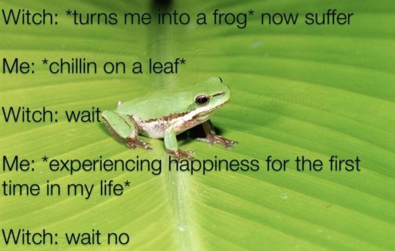 funny memes, frog memes, memes