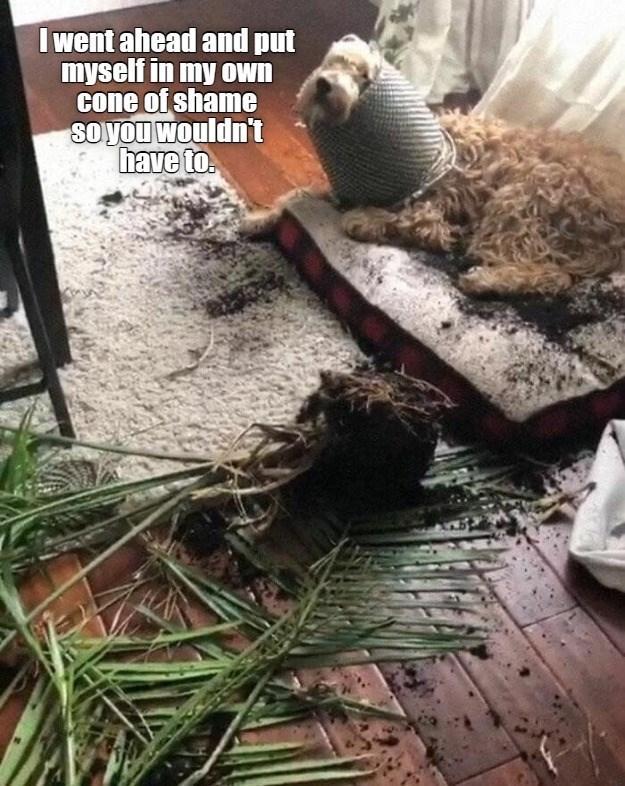 dog memes - 9606757632