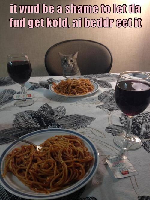 cat memes - 9606757888